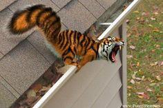 Funny Photoshopped Animals - Funny Photoshop Animal 022 (FunnyPica.com)