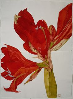 Houseplants for Better Sleep Beautifullove The Artistry and Colors Of This Amaryllis Painting By Sarah Graham Botanical Drawings, Botanical Illustration, Botanical Prints, Art Floral, Sarah Graham Artist, Amarillis, Plant Drawing, Plantar, Large Flowers