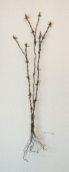 Barbed wire plant - SOLD