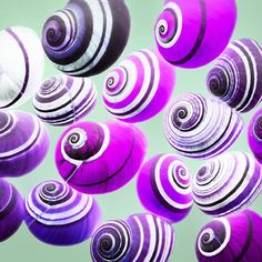 Purple Tree Snails - why can't I have THESE guys in my yard? I'd never poison them, I promise!