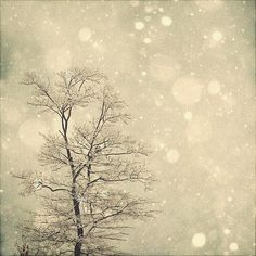 Items similar to Nature Photography Winter Art: First Snow Fine Art Photography Snow Bokeh, Tree Wall Art, Nature Wall Art, Nature Photography White Grey art on Etsy Winter Photography, Fine Art Photography, Nature Photography, Photography Ideas, Winter Art, Winter Snow, Winter Christmas, Merry Christmas, Winter Trees