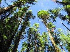 grow more fucking trees - Ecosia