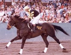 Seatle Slew  2-15-74 to 5-7-02American Thoroughbred who won the United States Triple Crown in 1977,the 10th of 11 horses to accomplish the feat.He remains the ONLY horse to win the Triple Crown while undefeated.In the Blood-Horse List of the Top 100 U.S. Racehorses of the 20th Century,he is ranked 9th.  A descendant of the great sire Nearco through his son, Nasrullah, Seattle Slew was sired by Bold Reasoning & out of My Charmer.He was foaled at Ben Castleman's White Horse Acres Farm in…