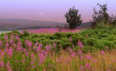 Plateau de la Margeride