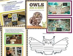 Owls, owls, owls....whooo loves owls? Your students will hoot and holler over this owl informational text unit filled with CCSS reading, writing and shared research activities.  This owl unit includes: --Suggestions for use with photos of work samples --Detailed lesson plans using gradual release of responsibility  --CCSS alignment and essential questions  --KWL owl foldable --Key vocabulary posters with owl photos --Question and answer owl foldable --Owl pointers to cite textual ...