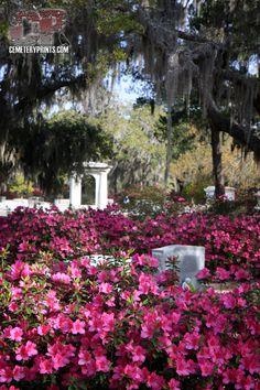 Bonaventure Cemetery / Savannah, Ga.
