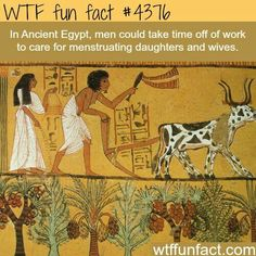 WTF Fun Facts is updated daily with interesting & funny random facts. We post about health, celebs/people, places, animals, history information and much more. New facts all day - every day! Wtf Fun Facts, Random Facts, Odd Facts, Crazy Facts, True Facts, Random Stuff, Ancient Egypt, Ancient History, Interesting History