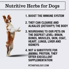 The Pet Anthology   Nutritive Herbs for Dogs - Discover 3 Top Herbs for Dogs on petanthology.com