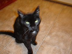 Sydnee, probably the last good picture we have of her before we had to put her to sleep.  She was my much loved baby