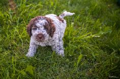 Puppy Alert! Cute Dogs, Puppies, Animals, Cubs, Animales, Animaux, Animal, Animais, Funny Dogs
