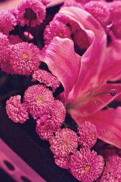Pink mums and lilies at Loida & Leo's wedding Lilies, Purple, Pink, Wedding Planner, Wedding Ideas, Plants, Beauty, Wedding Planer, Irises