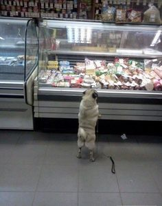 Yes, hai, I'll take 1 lb of the salami sliced at a 10, and 2 lb of the turkey....