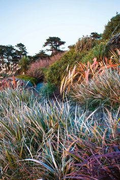 Gardening by the ocean on New Zealand's Banks Peninsula - Colourful phormiums are a highlight amongst this garden's ornamental grasses Garden Ideas Nz, Garden Inspiration, New Zealand Landscape, Coastal Gardens, Rustic Gardens, Landscape Design Plans, Garden Bulbs, Garden Plants, Sloped Garden
