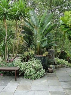 Tropical Garden Design, Tropical Landscaping, Front Yard Landscaping, Landscaping Ideas, Tropical Plants, Mulch Landscaping, Small Tropical Gardens, Asian Plants, Backyard Trees