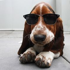 """""""If you're hungover, wear sunglasses. Works every time."""" 