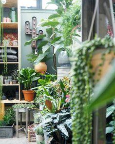 Hipaholic Blog   Lifestyle Blog met inspiratie over interieur, DIY en travel: Hotspot: Groene Vingers Delft