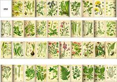 Libro de botánica - Rakelminis