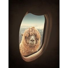 Dear Madam or Sir, whilst flying through the Andes, you tend to travel rather high, I'm your personal companion for this trip, and surely I won't spit