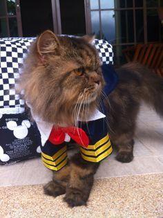 CAT PILOT UNIFORM & 9 best Capt. Meow images on Pinterest   Pilot Pilots and Funny kitties