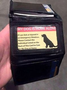 Ideia muito boa. Animals And Pets, Cute Animals, Pomsky, Dog Care, Dog Owners, Doge, Dog Mom, Dog Training, Training Tips