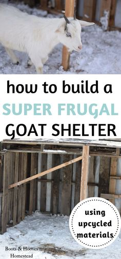 This year, we needed to expand our goat shelter but stay within our end of the year budget. So my skilled husband put a plan together on how to build a super frugal goat shelter.