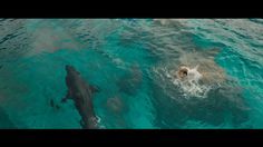 Here is a new trailer for #TheShallows with the #VFX by #SohoVFX, #MammalStudios and more: http://www.artofvfx.com/the-shallows/
