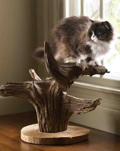 Cat Tree DIY from Martha Stewart