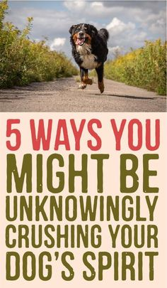 5 Ways you might be unknowingly crushing your dogs spirit -- I read this article and agreed with it.