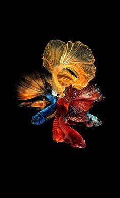 Apple Wallpaper Fish Backgrounds Cute Wallpapers Iphone Portrait