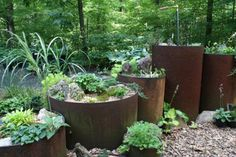 "mini hosta planted in old sewer pipes"" data-componentType=""MODAL_PIN Barrel Garden Planters, Rusty Garden, Garden Boxes, Garden Edging, Garden Trellis, Backyard Renovations, Hosta Plants, Home Landscaping, Garden Projects"