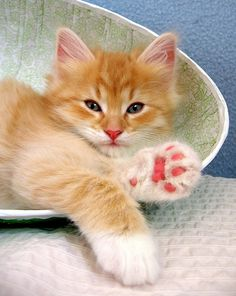 Orange kitty with pink paws! My favorite combination ;)