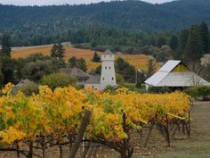 On the road to Mendocino through Anderson Valley.  Photo by Laura Levy. Mendocino County, California