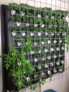 1000 Images About Vertical Aeroponic Grow Wall On 400 x 300