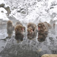 hot-tubbing with snow monkeys :)