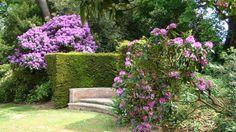 Bois des Moutiers - Rhododendron