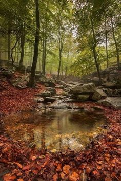 Autumn forest / Outdoor Photographer's landscape and nature photography tips help you to master the skills needed for successful landscape and nature photography. Landscape Photography Tips, Landscape Photos, Nature Photography, Sky Landscape, Digital Photography, Photography Tricks, Summer Landscape, Foto Nature, Image Nature