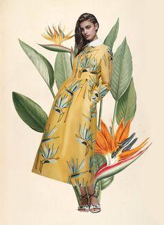 Miss Moss: Botanical Resort. Colour Mash Ups of Resort 2016 x Vintage Botanical Illustrations (Burberry Prorsum)