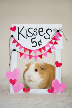 Kissing booth, reasonable prices for kisses