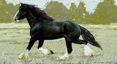 Shire Horse | Shire_Horse_by_JoSav.jpg