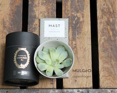 Laduree, tea, Mast Chocolate, MULGéO copenhagen, Store Kongensgade 93, 1264 Copenhagen K > Organic Design Gastro - mulgeo.com #mulgeo