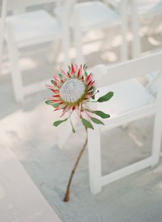 king #protea accenting the ceremony aisle Photography: Lauren Kinsey Fine Art Wedding Photography - laurenkinsey.com  Read More: http://stylemepretty.com/2013/10/21/key-west-wedding-from-lauren-kinsey/