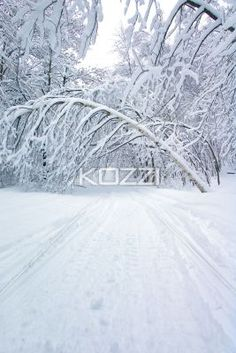 hanging tree - A snow covered tree hangs over a snowmobile trail in Ontario