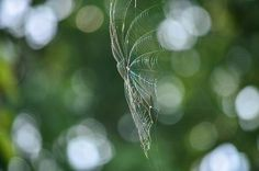 The Spider's Web by cheribug
