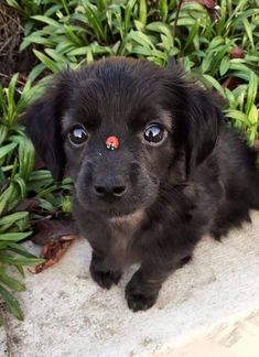 Ummm Excuse me Human why is there a ladybug on my snoot? Click here for more adorable animal pics!