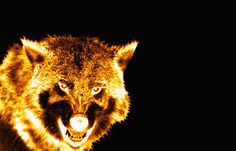 flaming foxe - Google Search
