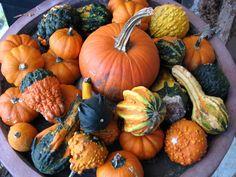 Pumpkin Ideas, Fall Pumpkins, Fall Decor, Flora, Autumn, Seasons, Vegetables, Fruit, Halloween