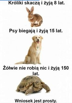 Nic nie rób, a żyć będziesz. Funny Shit, Wtf Funny, Funny Cute, Memes Humor, Jokes, Funny Animals, Cute Animals, Polish Memes, Weekend Humor