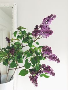 lilacs in the home