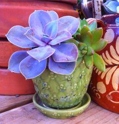 Vintage Shawnee Pottery Succulents!