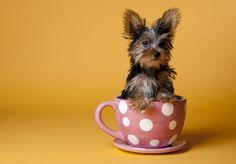 http://finofilipino.org/post/103710412300/60-animales-metidos-en-vasos-y-tazas